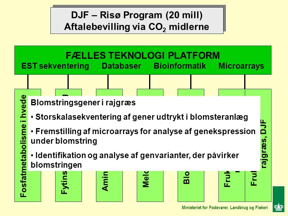 DJF – Risø Program (20 mill) Aftalebevilling via CO 2 midlerne DJF – Risø Program (20 mill) Aftalebevilling via CO 2 midlerne FÆLLES TEKNOLOGI PLATFORM EST sekventering Databaser Bioinformatik Microarrays Fosfatmetabolisme i hvede DJF Aminosyremetabolisme i byg, DJF Fytinsyre biosyntese i byg Risø Meldugresistens i byg Risø Blomstring i rajgræs Risø Fruktanmetabolisme i rajgræs, Risø, Fruktanmetabolisme i rajgræs, DJF Ministeriet for Fødevarer, Landbrug og Fiskeri Blomstringsgener i rajgræs Storskalasekventering af gener udtrykt i blomsteranlæg Fremstilling af microarrays for analyse af genekspression under blomstring Identifikation og analyse af genvarianter, der påvirker blomstringen