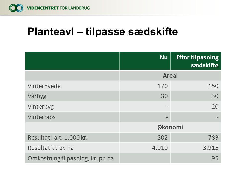 NuEfter tilpasning sædskifte Areal Vinterhvede170150 Vårbyg30 Vinterbyg-20 Vinterraps-- Økonomi Resultat i alt, 1.000 kr.802783 Resultat kr.