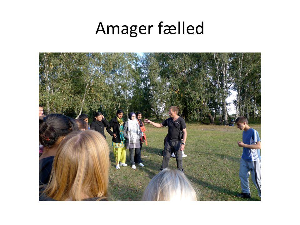 Amager fælled