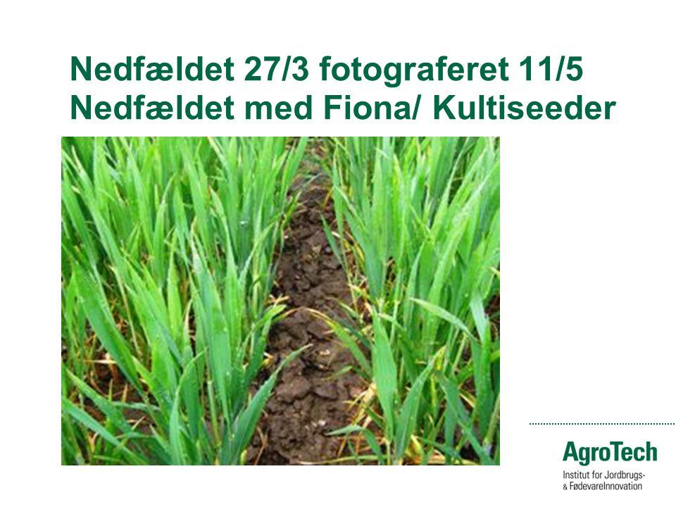 Nedfældet 27/3 fotograferet 11/5 Nedfældet med Fiona/ Kultiseeder
