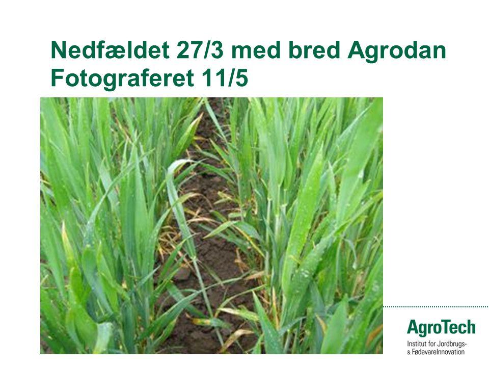 Nedfældet 27/3 med bred Agrodan Fotograferet 11/5