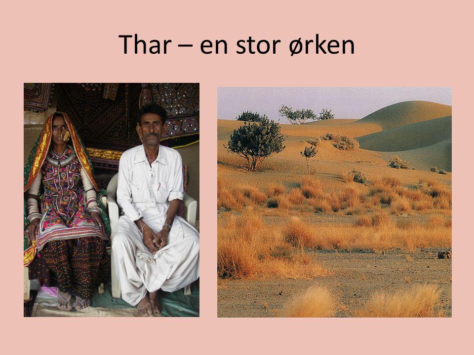 Thar – en stor ørken