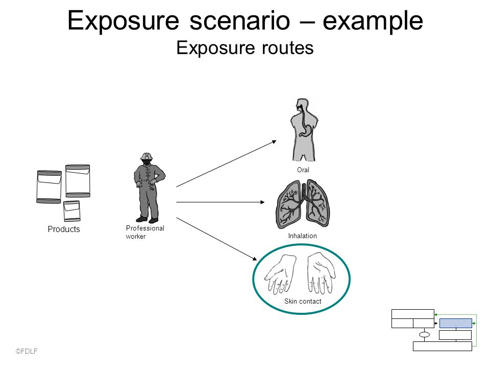 Exposure scenario – example Exposure routes Professional worker Skin contact Inhalation Oral Products.