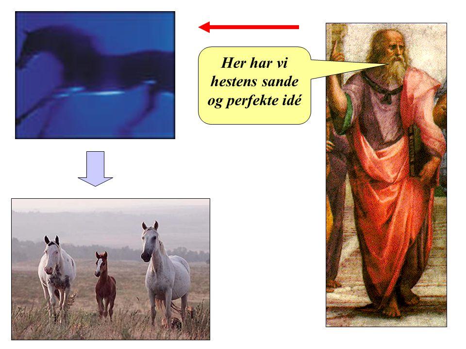 Her har vi hestens sande og perfekte idé