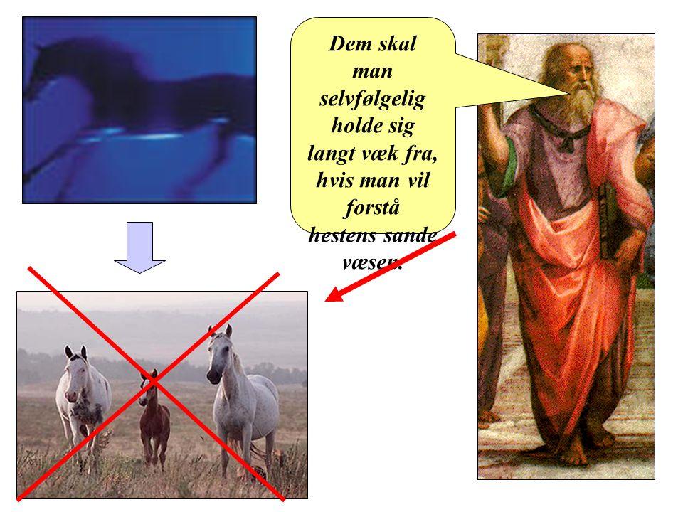 Platon Dem skal man selvfølgelig holde sig langt væk fra, hvis man vil forstå hestens sande væsen.