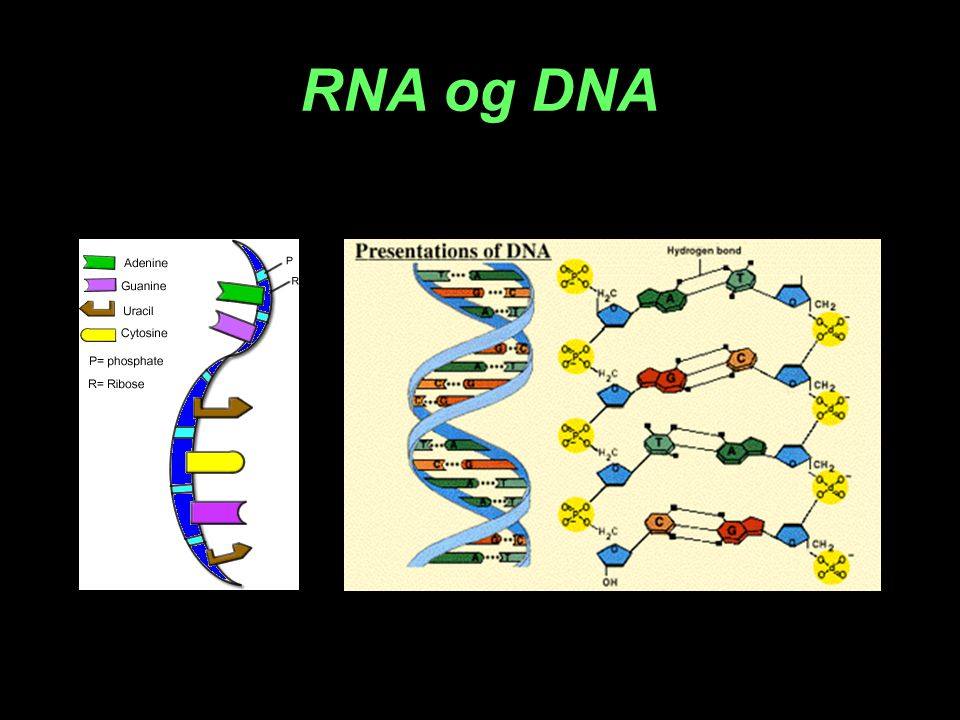 RNA og DNA