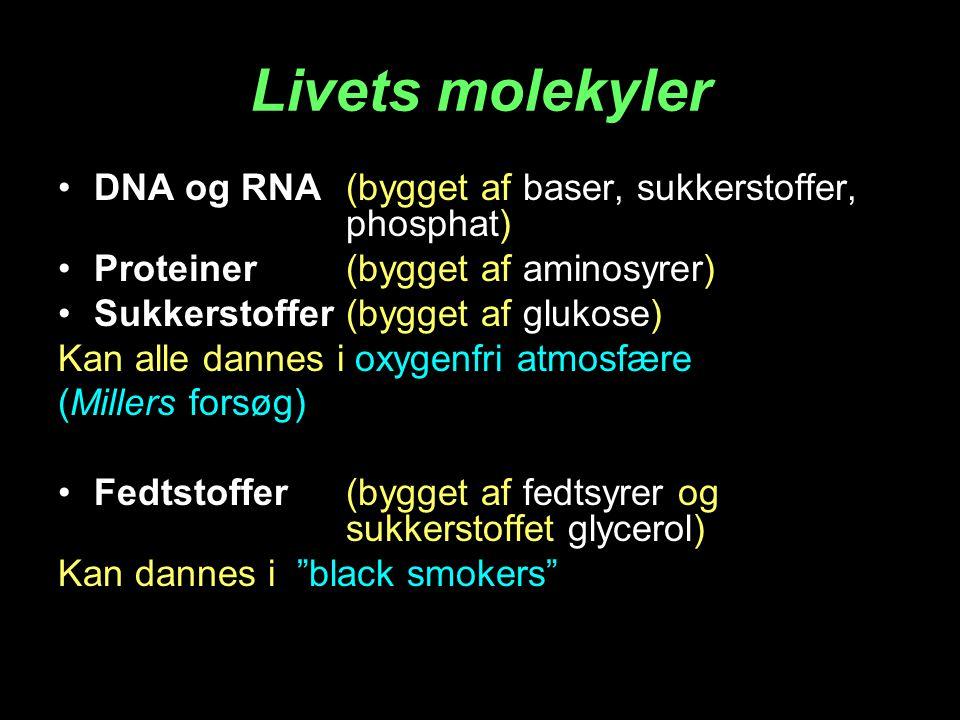 Livets molekyler DNA og RNA (bygget af baser, sukkerstoffer, phosphat) Proteiner (bygget af aminosyrer) Sukkerstoffer(bygget af glukose) Kan alle dannes i oxygenfri atmosfære (Millers forsøg) Fedtstoffer(bygget af fedtsyrer og sukkerstoffet glycerol) Kan dannes i black smokers