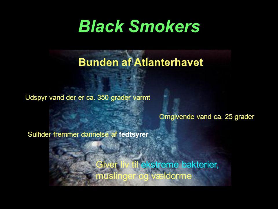 Black Smokers Udspyr vand der er ca.350 grader varmt Omgivende vand ca.