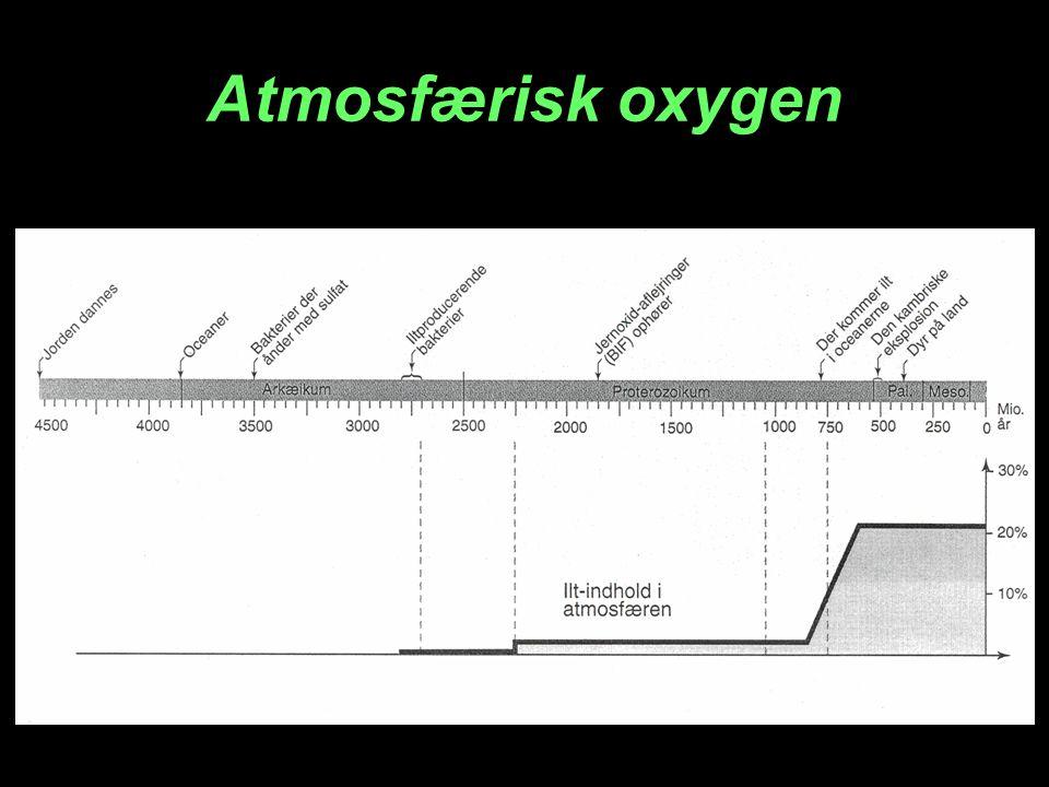 Ozonlaget O 2 2 O O 2 + O O 3 Ozon (O 3 ) Oxygen Oxygenatomer Katalyseres af CFC-gasser Ozon I stratosfæren UV