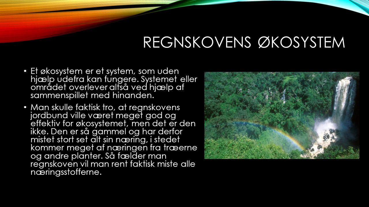 REGNSKOVENS ØKOSYSTEM Et økosystem er et system, som uden hjælp udefra kan fungere.