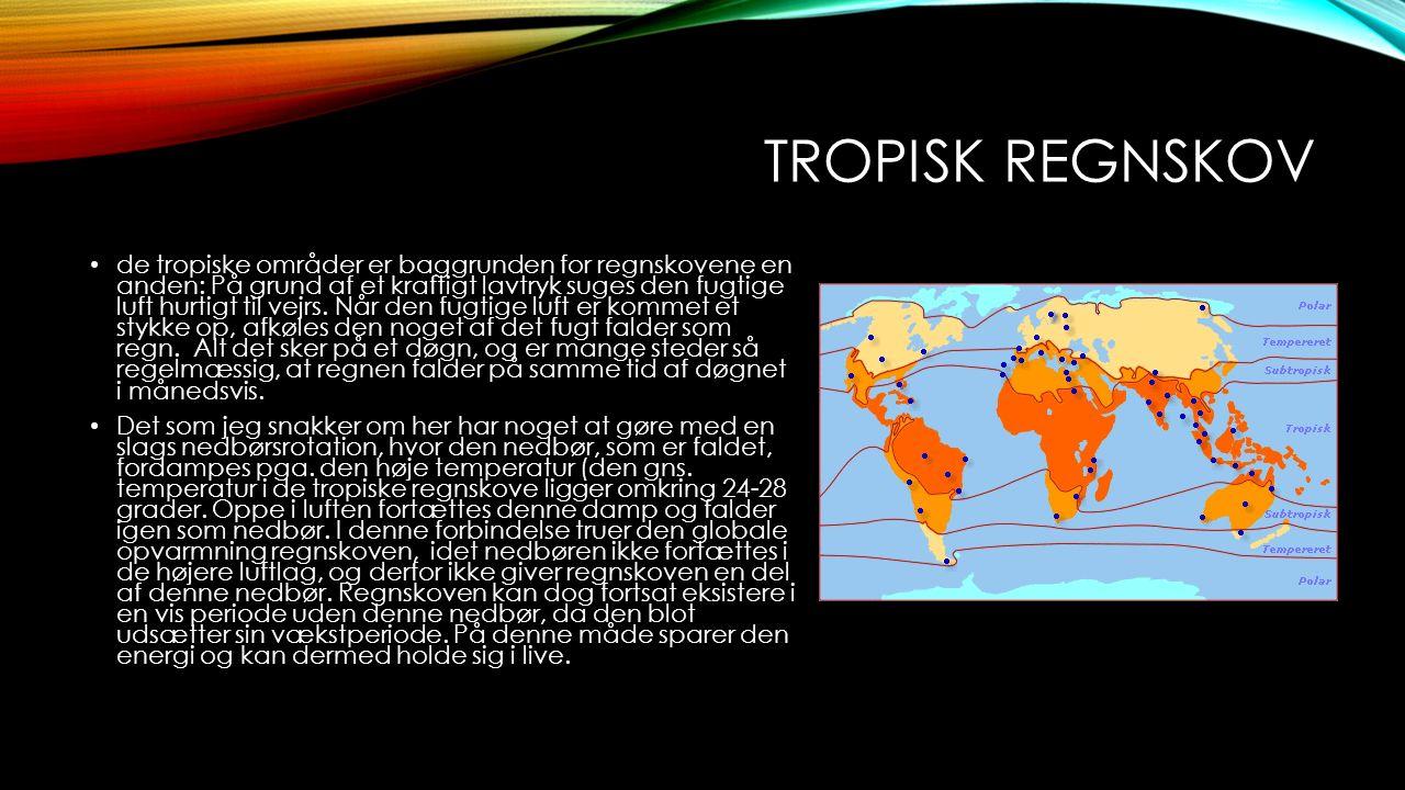 TROPISK REGNSKOV På grund af den høje temperatur og luftfugtighed, rådner døde dyr og planter meget hurtigt, og næringen herfra optages hurtigt af træerne.