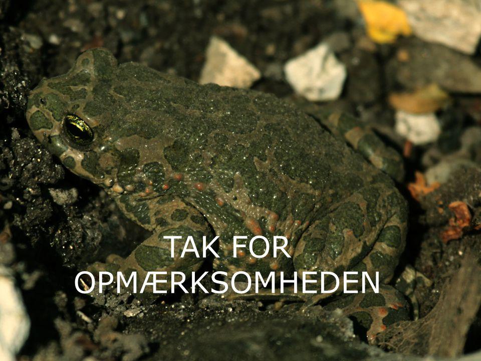 16 TAK FOR OPMÆRKSOMHEDEN