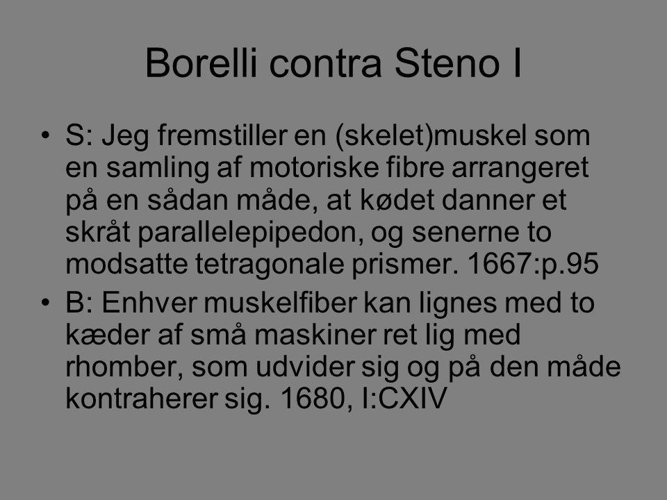 Borelli contra Steno I S: Jeg fremstiller en (skelet)muskel som en samling af motoriske fibre arrangeret på en sådan måde, at kødet danner et skråt parallelepipedon, og senerne to modsatte tetragonale prismer.