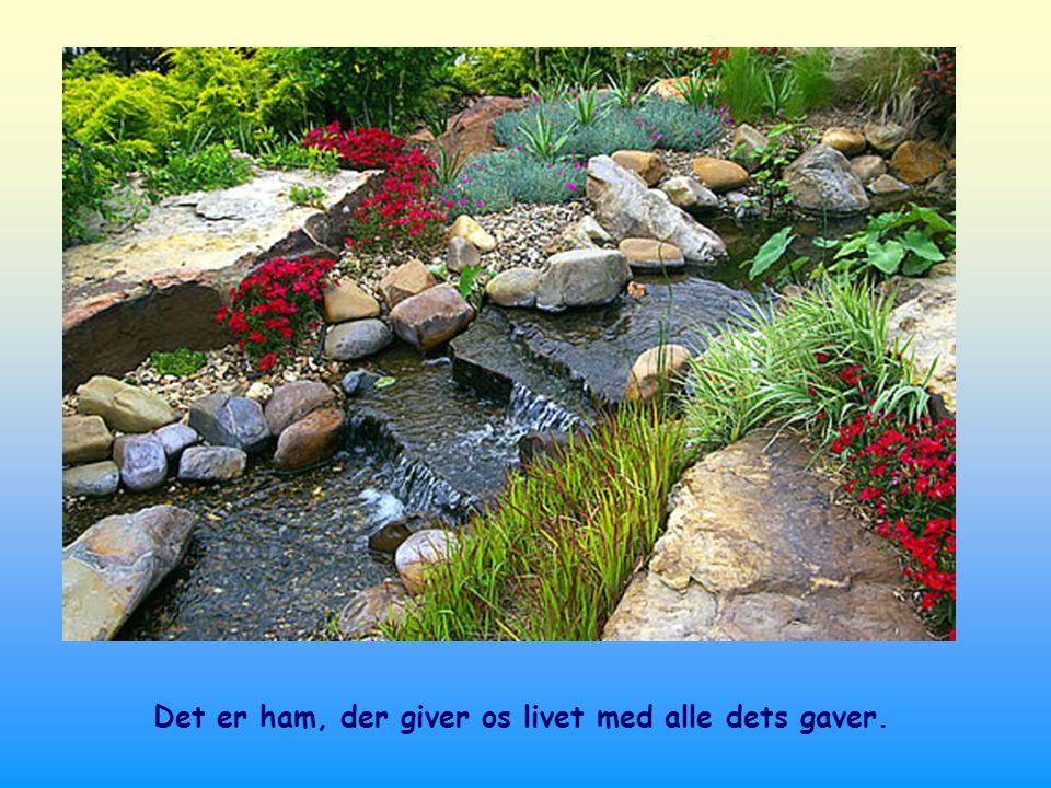 Jo mere vi drikker af denne kilde, jo mere vi lever af dette levende vand, der er hans ord, desto mere nærmer vi os hinanden og lever som brødre og søstre.