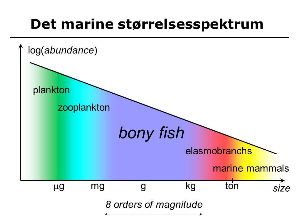size gg mggkgton log(abundance) plankton zooplankton bony fish elasmobranchs marine mammals 8 orders of magnitude Det marine størrelsesspektrum