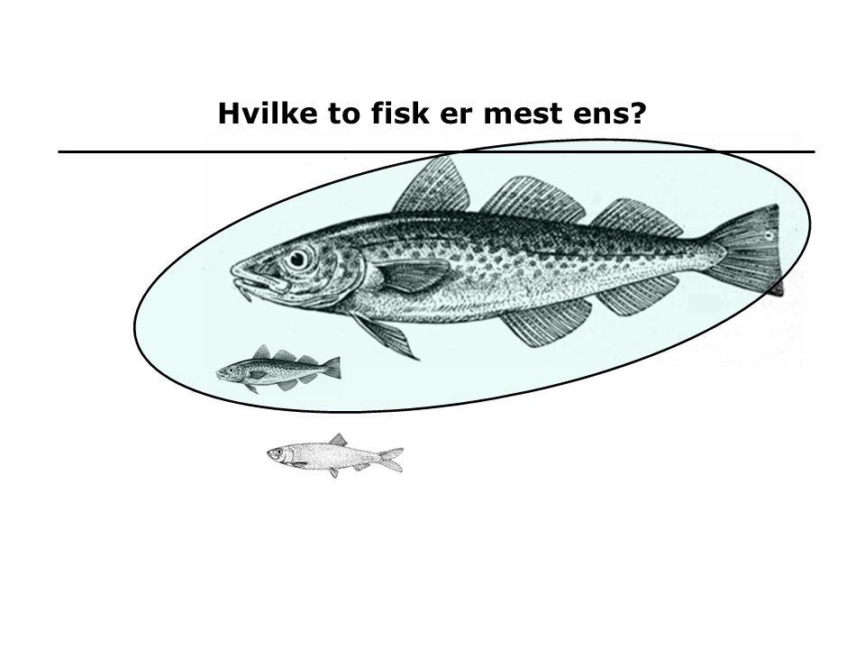 Hvilke to fisk er mest ens