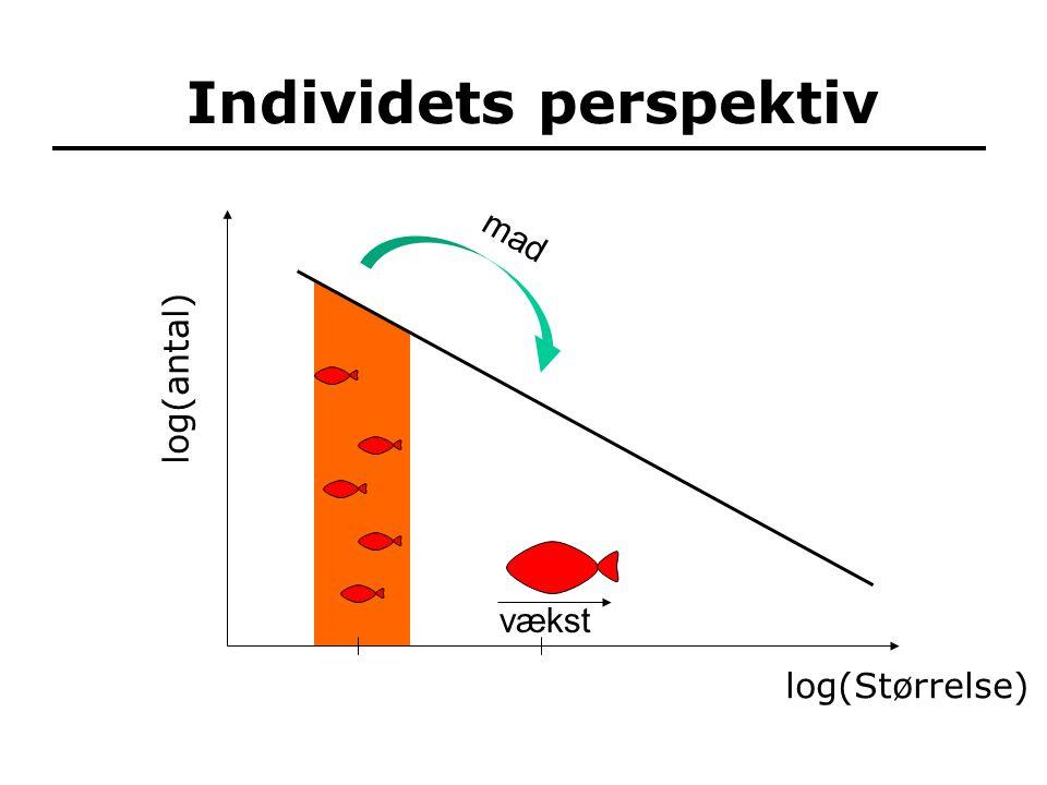 mad Individets perspektiv vækst log(Størrelse) log(antal)