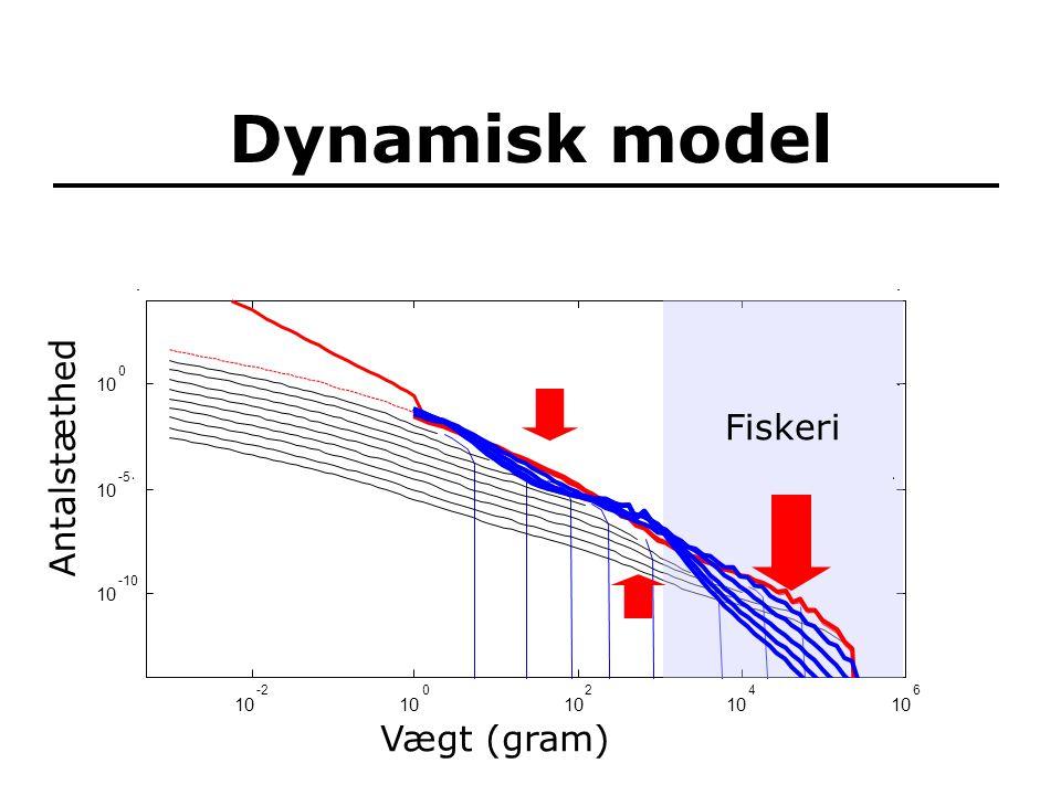 Dynamisk model 10 -2 10 0 2 4 6 -10 10 -5 10 0 Fiskeri Vægt (gram) Antalstæthed