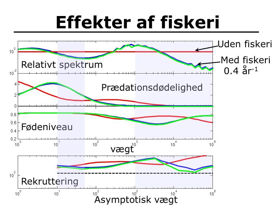 Effekter af fiskeri 10 -2 10 0 0 Relativt spektrum vægt 10 0 1 2 3 4 5 0.2 0.4 0.6 0.8 Fødeniveau Uden fiskeri Med fiskeri 0.4 år -1