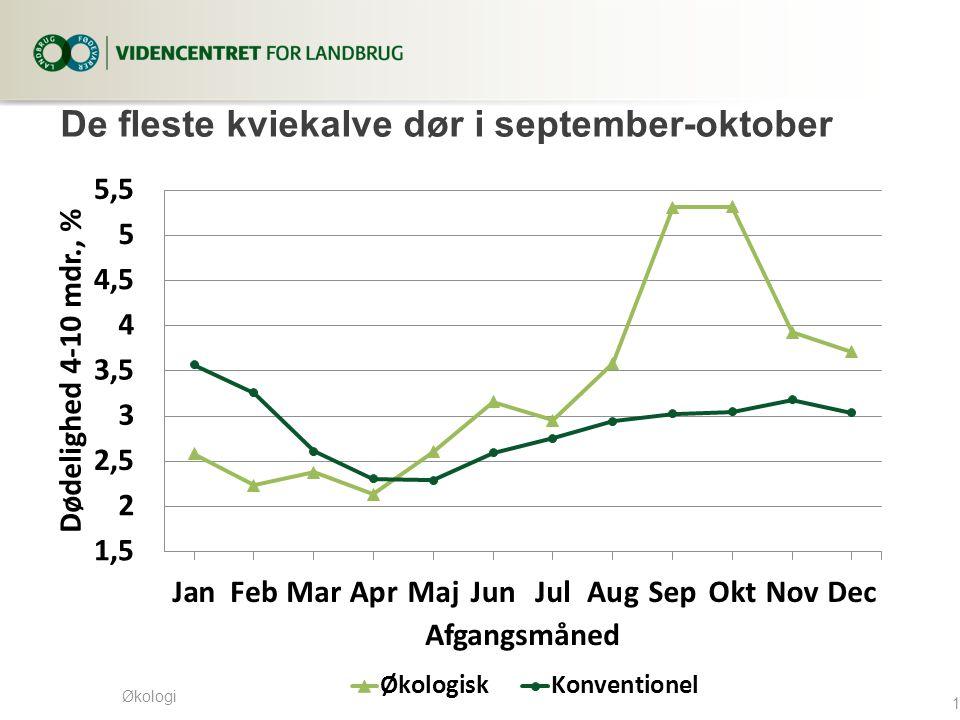 Økologi De fleste kviekalve dør i september-oktober 10