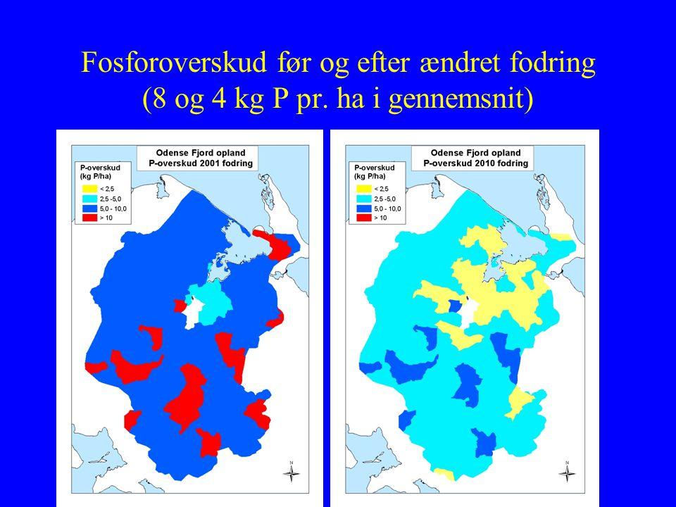 Fosforoverskud før og efter ændret fodring (8 og 4 kg P pr. ha i gennemsnit)