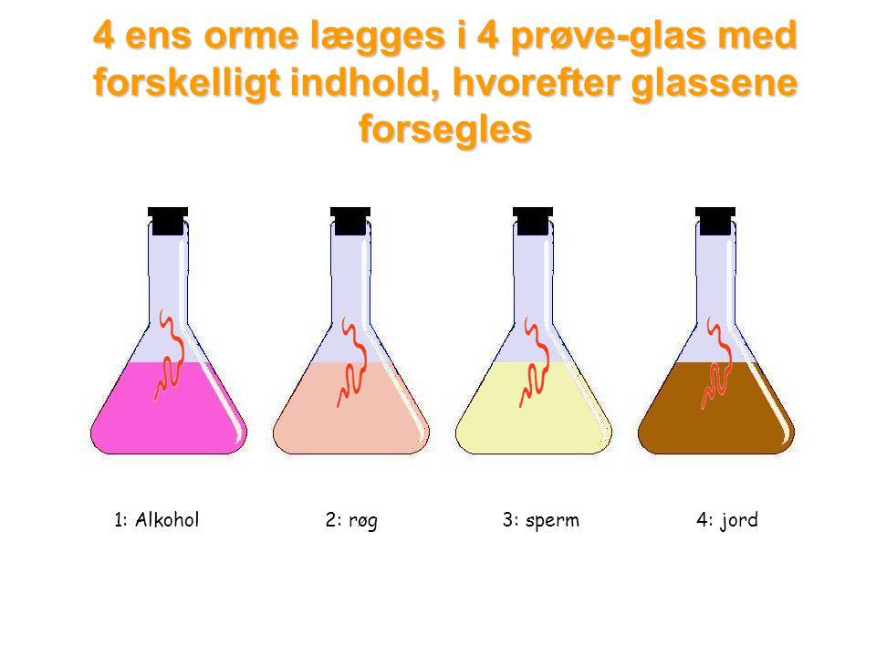 4 ens orme lægges i 4 prøve-glas med forskelligt indhold, hvorefter glassene forsegles 1: Alkohol2: røg3: sperm4: jord