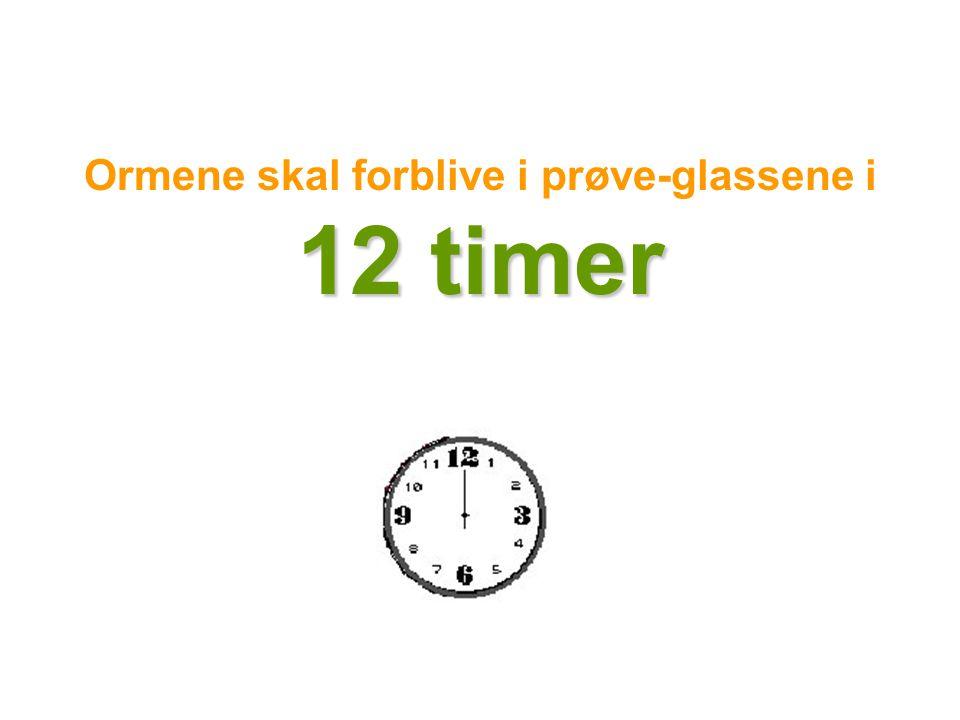 Ormene skal forblive i prøve-glassene i 12 timer