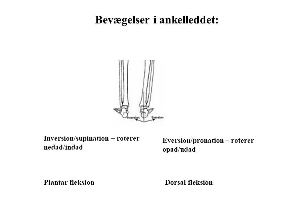 Eversion/pronation – roterer opad/udad Inversion/supination – roterer nedad/indad Bevægelser i ankelleddet: Plantar fleksionDorsal fleksion