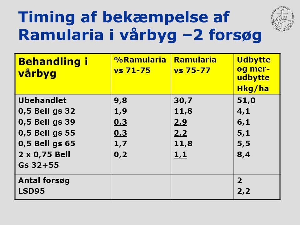 Timing af bekæmpelse af Ramularia i vårbyg –2 forsøg Behandling i vårbyg %Ramularia vs 71-75 Ramularia vs 75-77 Udbytte og mer- udbytte Hkg/ha Ubehandlet 0,5 Bell gs 32 0,5 Bell gs 39 0,5 Bell gs 55 0,5 Bell gs 65 2 x 0,75 Bell Gs 32+55 9,8 1,9 0,3 1,7 0,2 30,7 11,8 2,9 2,2 11,8 1,1 51,0 4,1 6,1 5,1 5,5 8,4 Antal forsøg LSD95 2 2,2