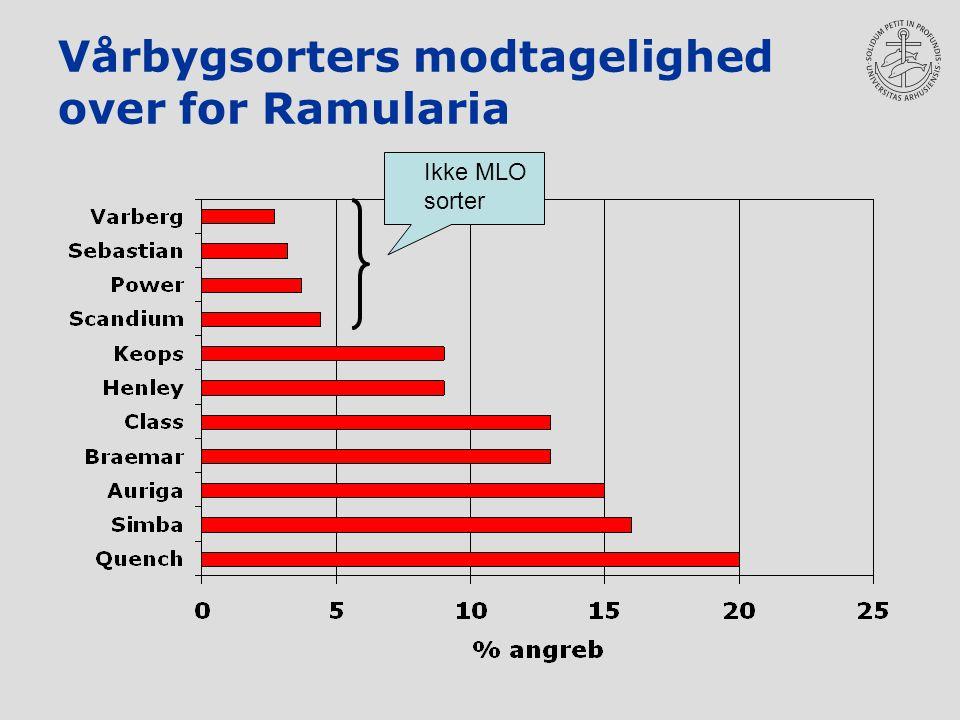 Vårbygsorters modtagelighed over for Ramularia Ikke MLO sorter