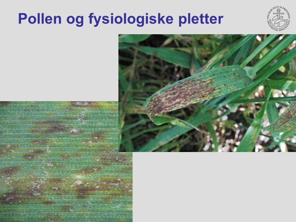 Pollen og fysiologiske pletter