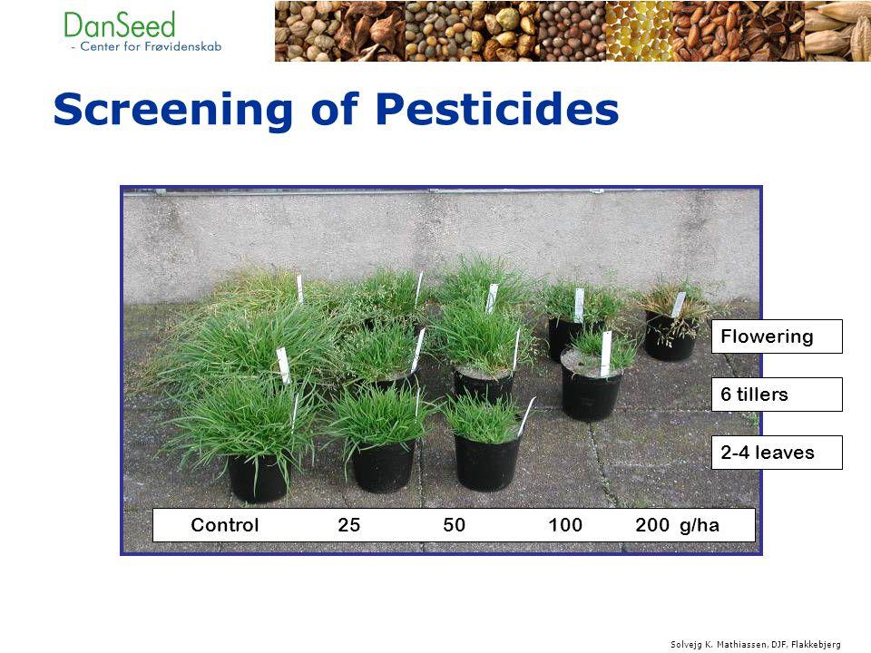 Flowering 6 tillers 2-4 leaves Control 25 50 100 200 g/ha Screening of Pesticides Solvejg K.