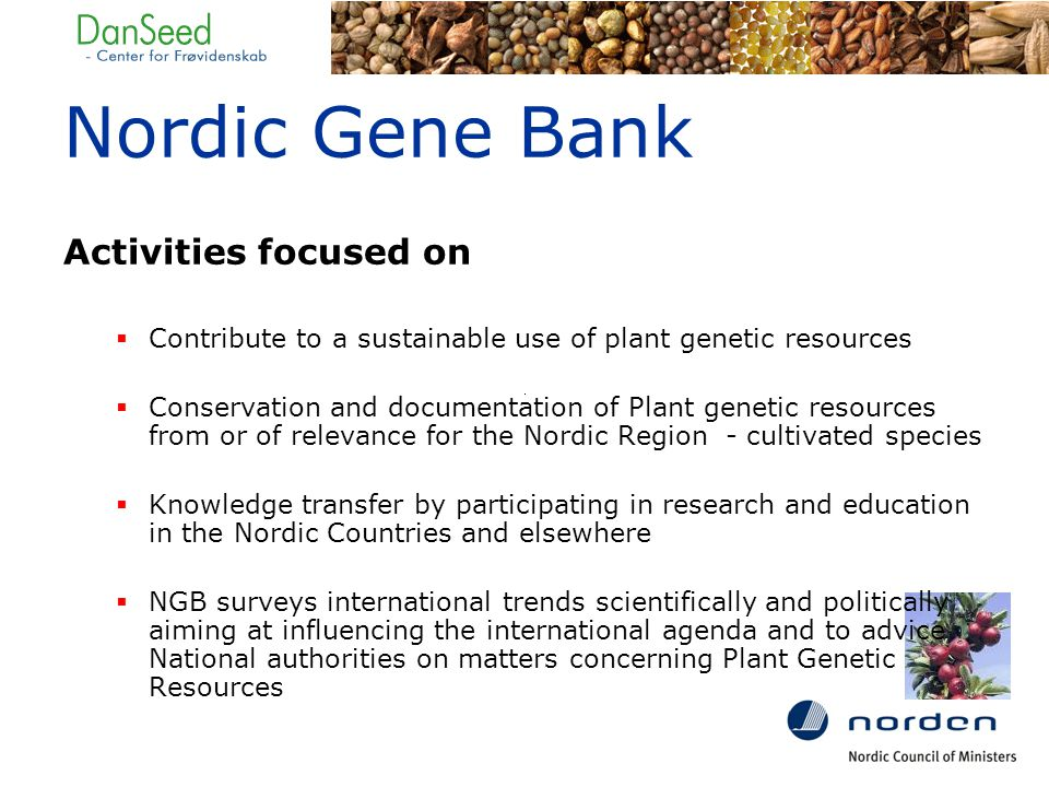 Nordic Gene Bank Activities focused on  Contribute to a sustainable use of plant genetic resources  Conservation and documentation of Plant genetic resources from or of relevance for the Nordic Region - cultivated species  Knowledge transfer by participating in research and education in the Nordic Countries and elsewhere  NGB surveys international trends scientifically and politically aiming at influencing the international agenda and to advice National authorities on matters concerning Plant Genetic Resources