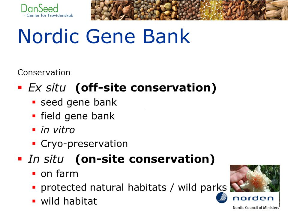 Nordic Gene Bank Conservation  Ex situ(off-site conservation)  seed gene bank  field gene bank  in vitro  Cryo-preservation  In situ(on-site conservation)  on farm  protected natural habitats / wild parks  wild habitat