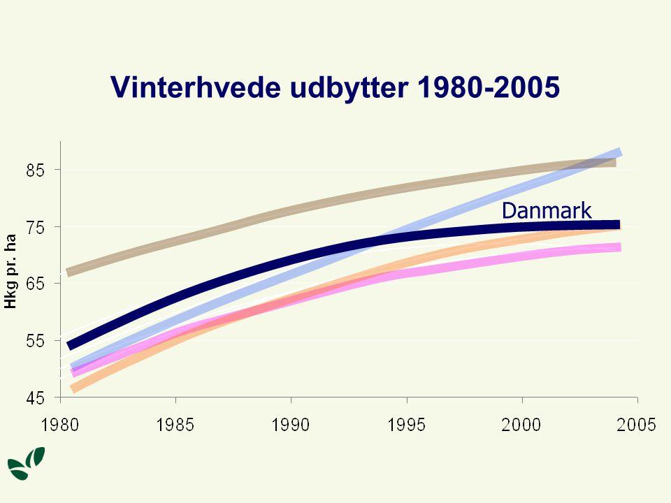 Vinterhvede udbytter 1980-2005 Danmark