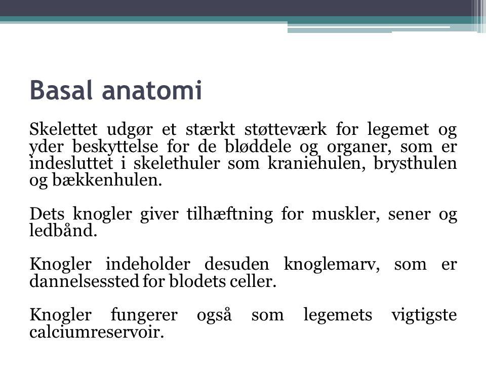 Basal anatomi Skelettet udgør et stærkt støtteværk for legemet og yder beskyttelse for de bløddele og organer, som er indesluttet i skelethuler som kr
