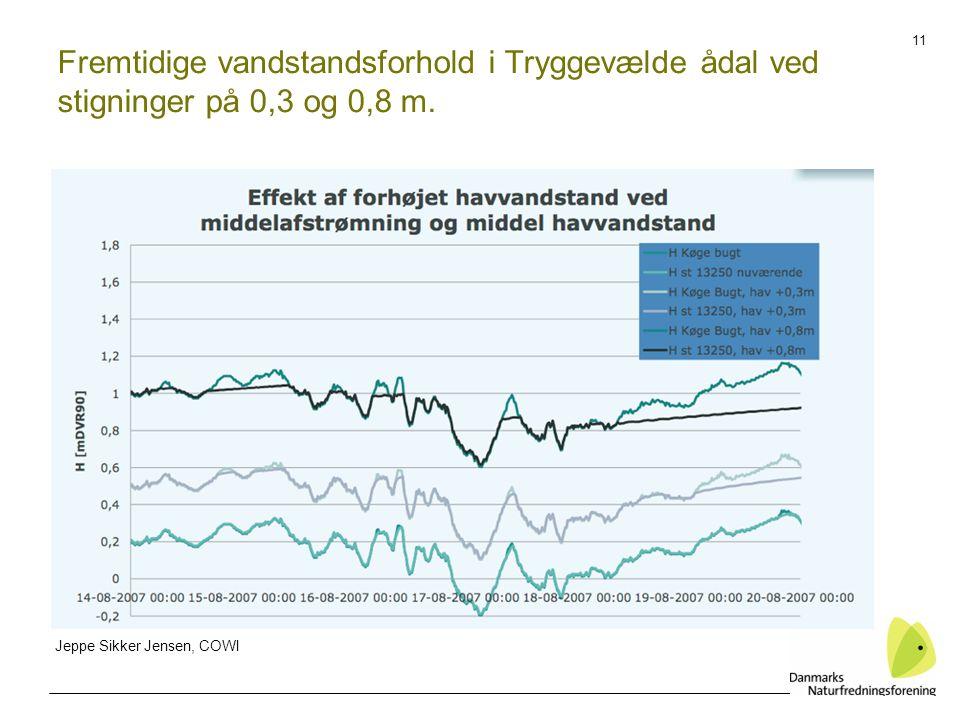 11 Fremtidige vandstandsforhold i Tryggevælde ådal ved stigninger på 0,3 og 0,8 m.