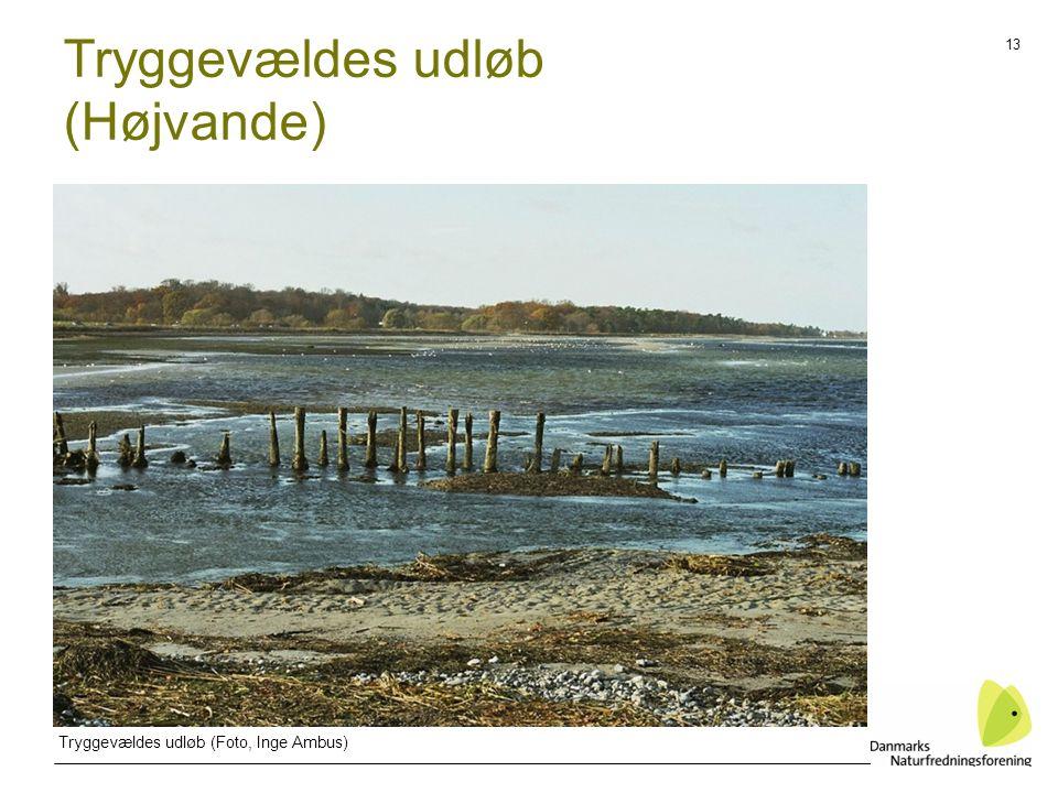 13 Tryggevældes udløb (Højvande) Tryggevældes udløb (Foto, Inge Ambus)