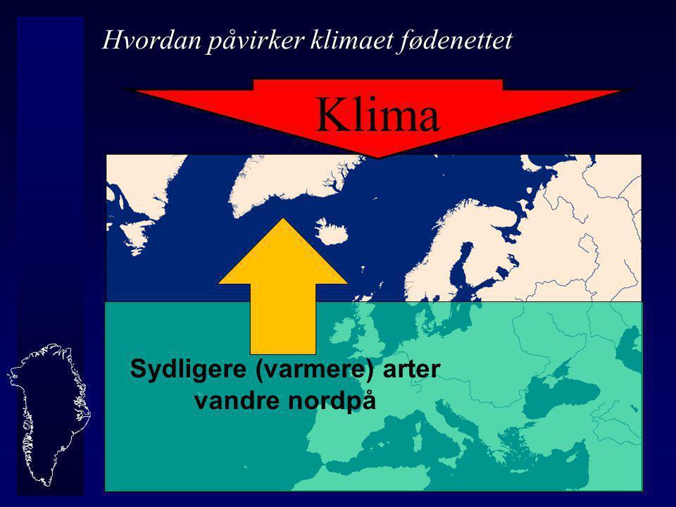 Sydligere (varmere) arter vandre nordpå Klima Hvordan påvirker klimaet fødenettet
