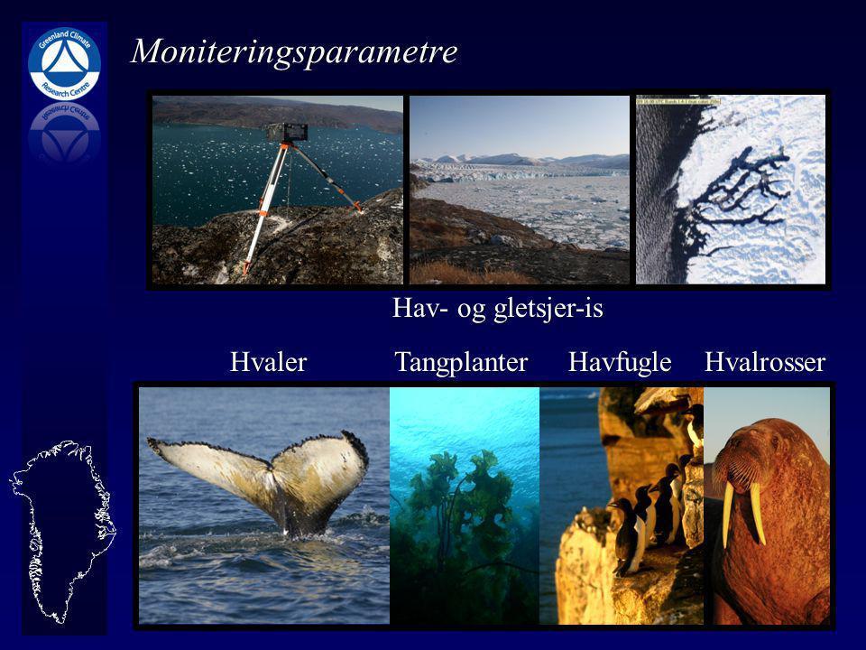 Hav- og gletsjer-is Hvaler Tangplanter Havfugle Hvalrosser Hvaler Tangplanter Havfugle Hvalrosser Moniteringsparametre