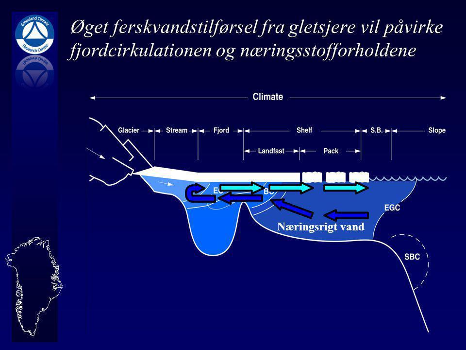 Øget ferskvandstilførsel fra gletsjere vil påvirke fjordcirkulationen og næringsstofforholdene Næringsrigt vand