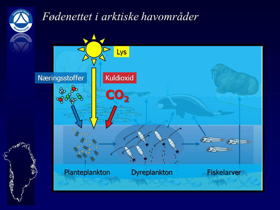 FiskelarverDyreplanktonPlanteplankton Lys Næringsstoffer CO 2 Kuldioxid Fødenettet i arktiske havområder