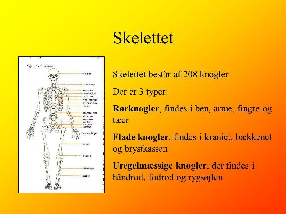 Skelettet Skelettet består af 208 knogler.