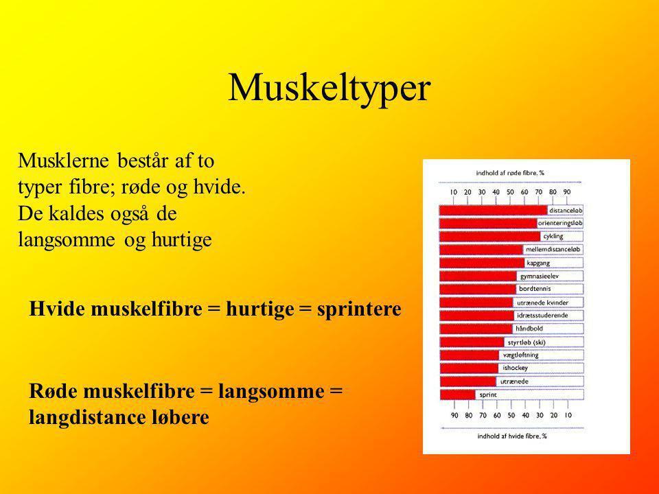 Muskeltyper Musklerne består af to typer fibre; røde og hvide.
