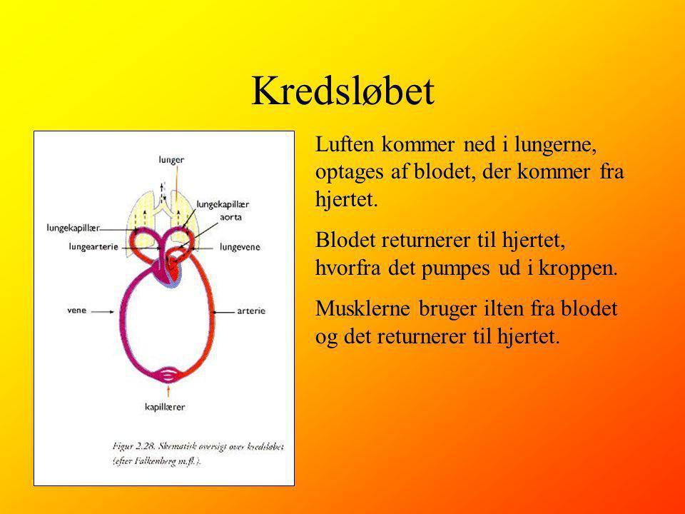 Kredsløbet Luften kommer ned i lungerne, optages af blodet, der kommer fra hjertet.