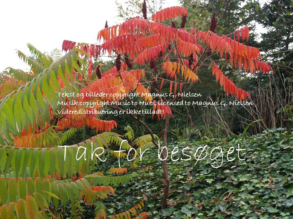 Tak for besøget Tekst og billeder copyright Magnus G.