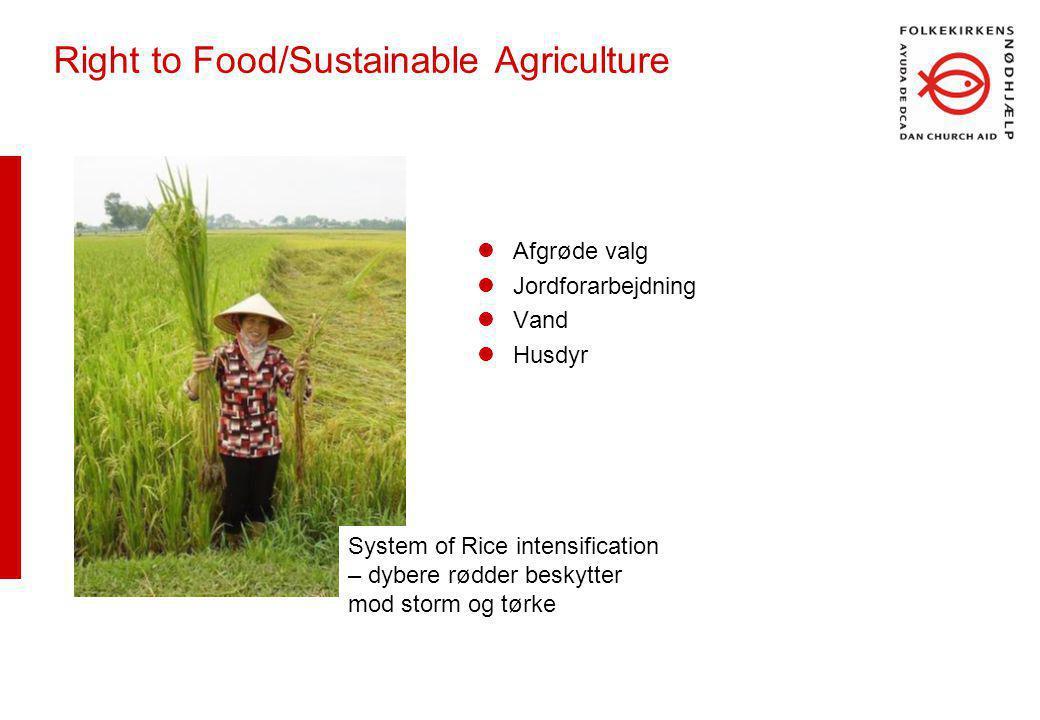 Right to Food/Sustainable Agriculture Afgrøde valg Jordforarbejdning Vand Husdyr System of Rice intensification – dybere rødder beskytter mod storm og tørke