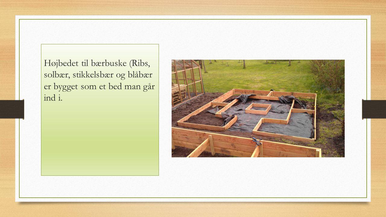 Højbedet til bærbuske (Ribs, solbær, stikkelsbær og blåbær er bygget som et bed man går ind i.