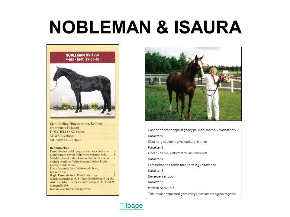 NOBLEMAN & ISAURA Passende stor hoppe af god type.