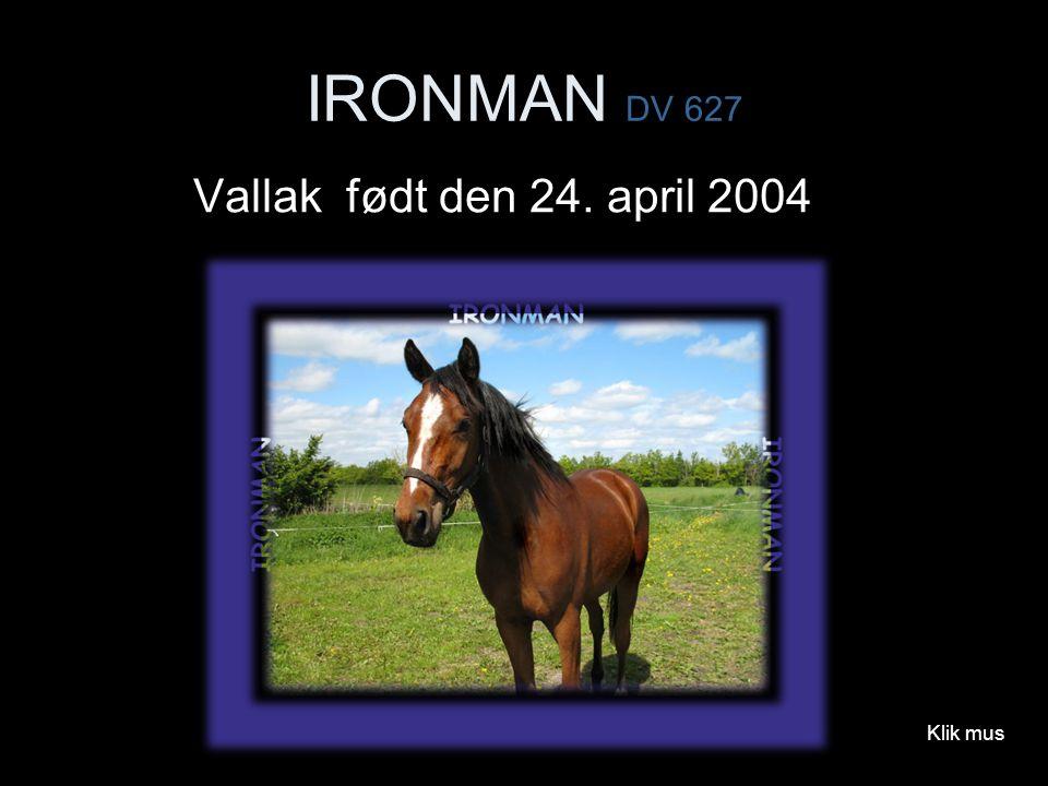 IRONMAN DV 627 Vallak født den 24. april 2004 Klik mus